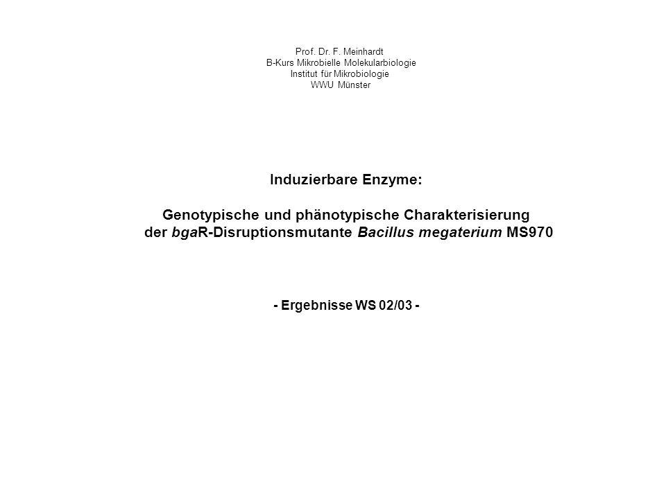 Induzierbare Enzyme: Genotypische und phänotypische Charakterisierung der bgaR-Disruptionsmutante Bacillus megaterium MS970 Prof. Dr. F. Meinhardt B-K