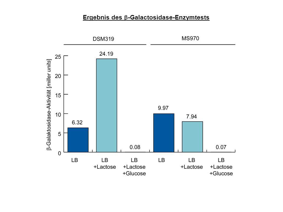 Ergebnis des -Galactosidase-Enzymtests