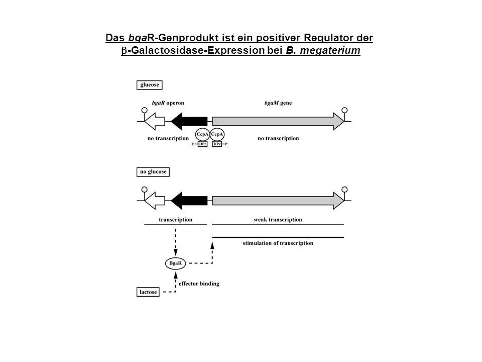 Das bgaR-Genprodukt ist ein positiver Regulator der -Galactosidase-Expression bei B. megaterium
