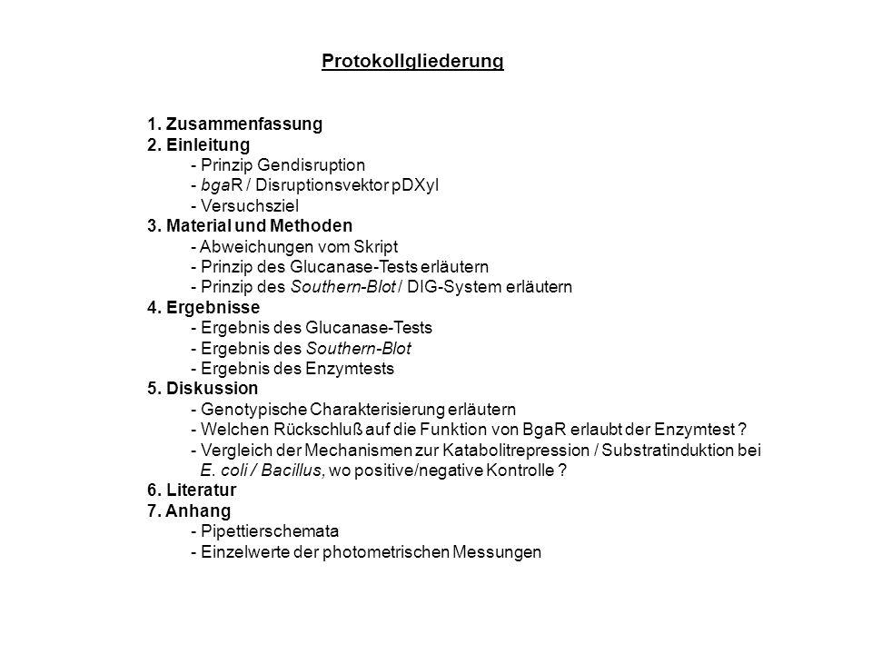 Protokollgliederung 1. Zusammenfassung 2. Einleitung - Prinzip Gendisruption - bgaR / Disruptionsvektor pDXyl - Versuchsziel 3. Material und Methoden