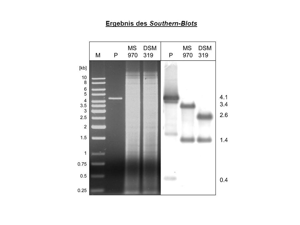 Quantifizierung der -Galactosidase-Aktivität