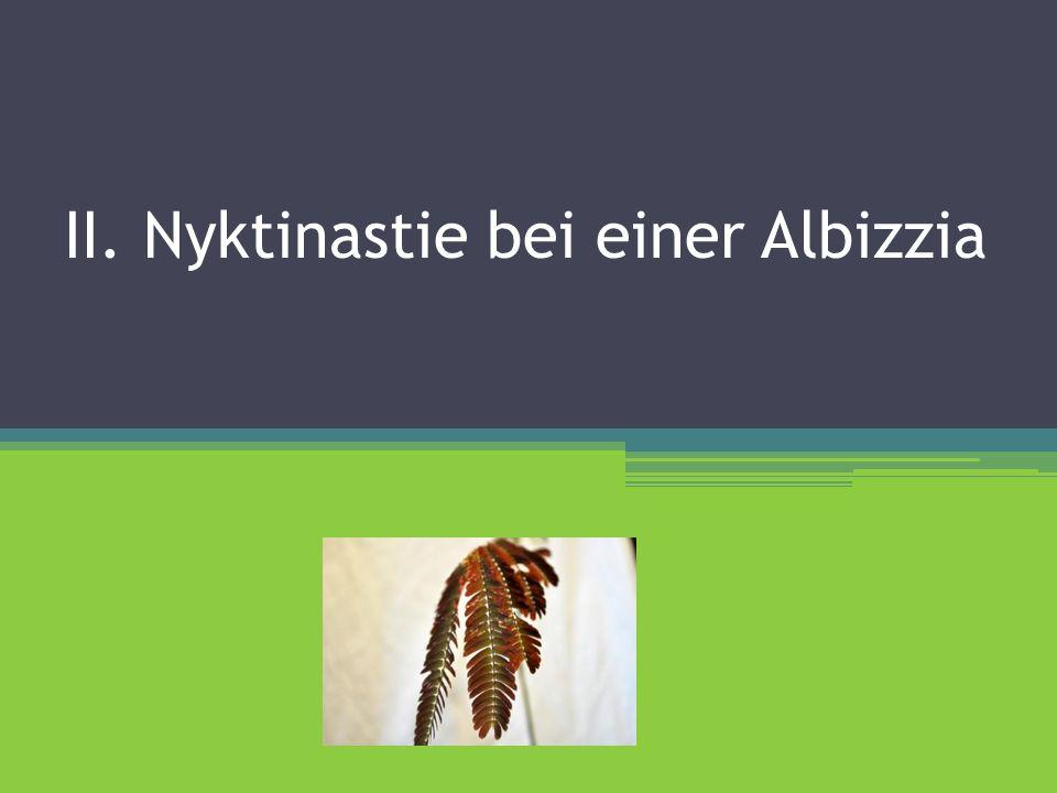 II. Nyktinastie bei einer Albizzia