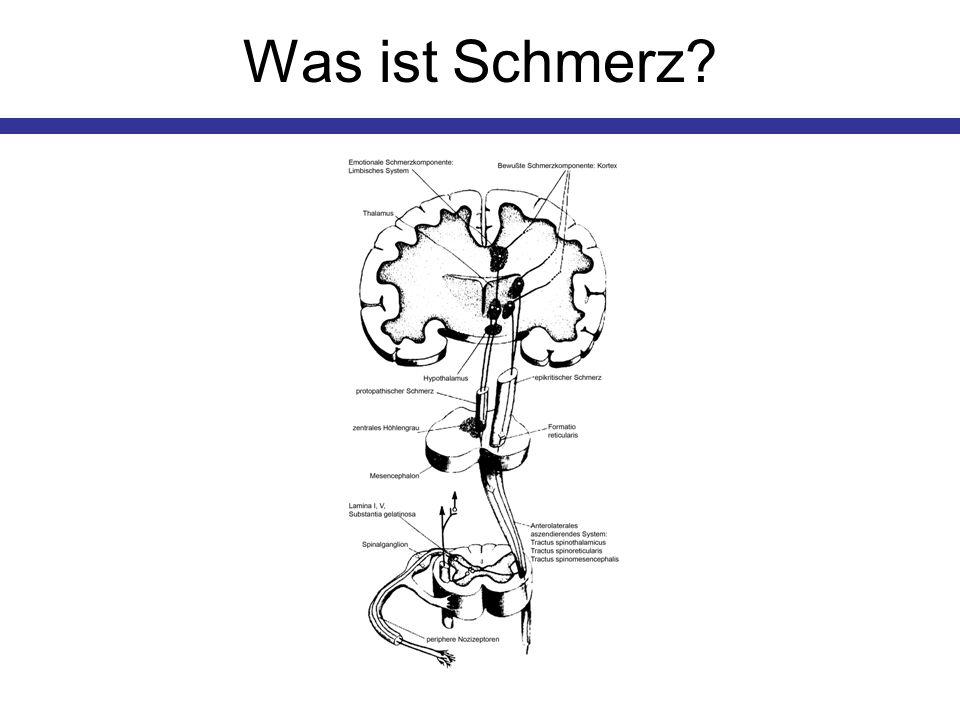 Periphere Schmerzentstehung 1 Nozizeptoren reagieren auf schwellenüberschreitende Reize Ein Signal wird zum Rückenmark bzw.