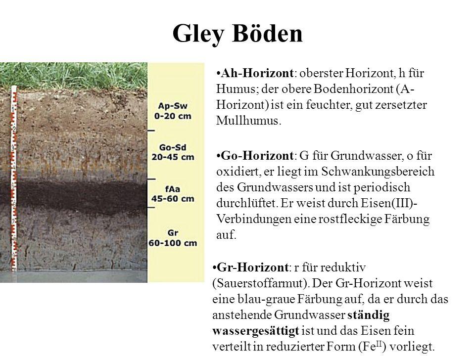 Gley Böden Ah-Horizont: oberster Horizont, h für Humus; der obere Bodenhorizont (A- Horizont) ist ein feuchter, gut zersetzter Mullhumus. Go-Horizont: