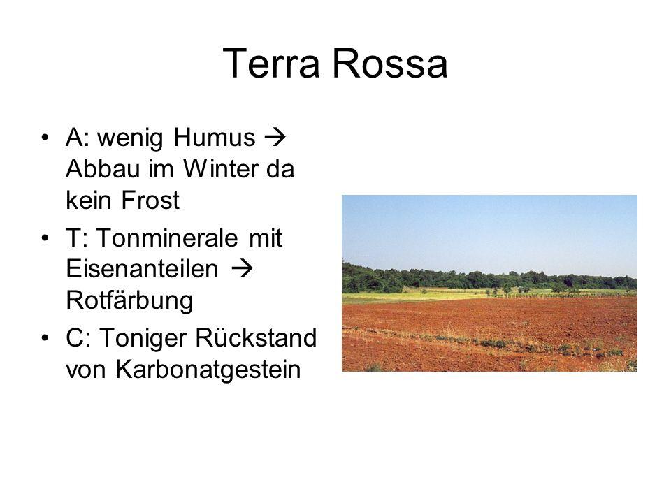 Terra Rossa A: wenig Humus Abbau im Winter da kein Frost T: Tonminerale mit Eisenanteilen Rotfärbung C: Toniger Rückstand von Karbonatgestein