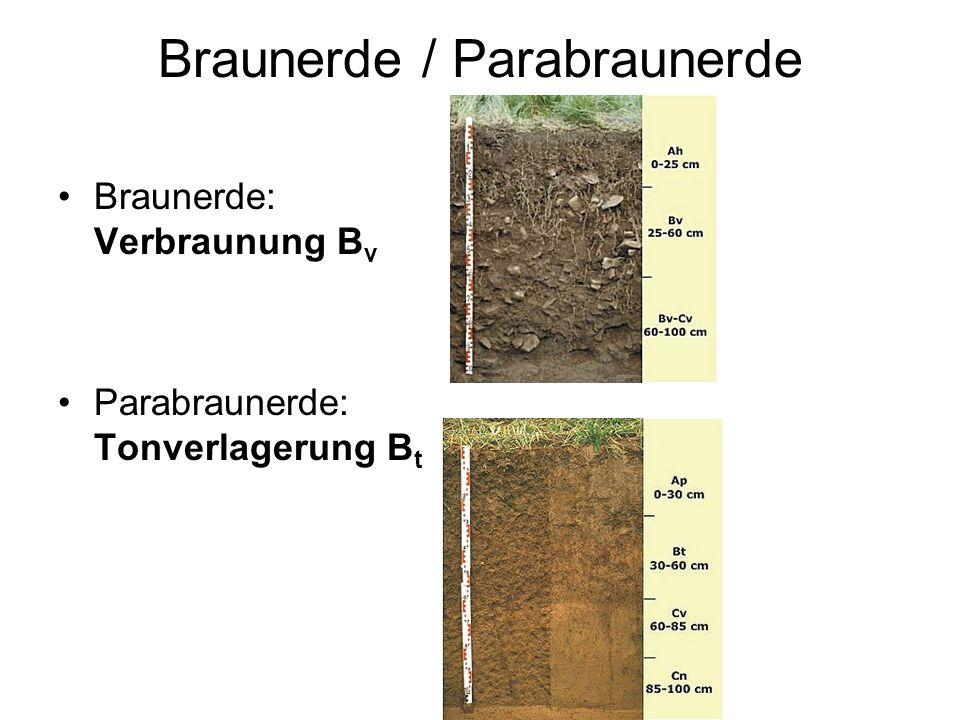 Braunerde / Parabraunerde Braunerde: Verbraunung B v Parabraunerde: Tonverlagerung B t
