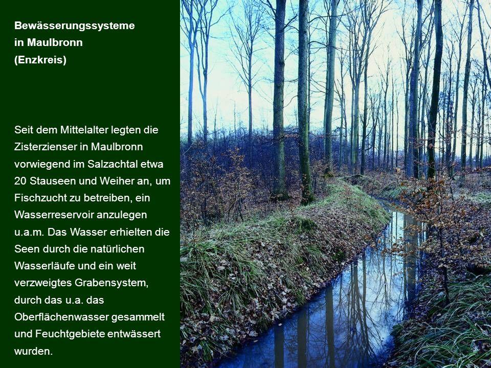 Seit dem Mittelalter legten die Zisterzienser in Maulbronn vorwiegend im Salzachtal etwa 20 Stauseen und Weiher an, um Fischzucht zu betreiben, ein Wa