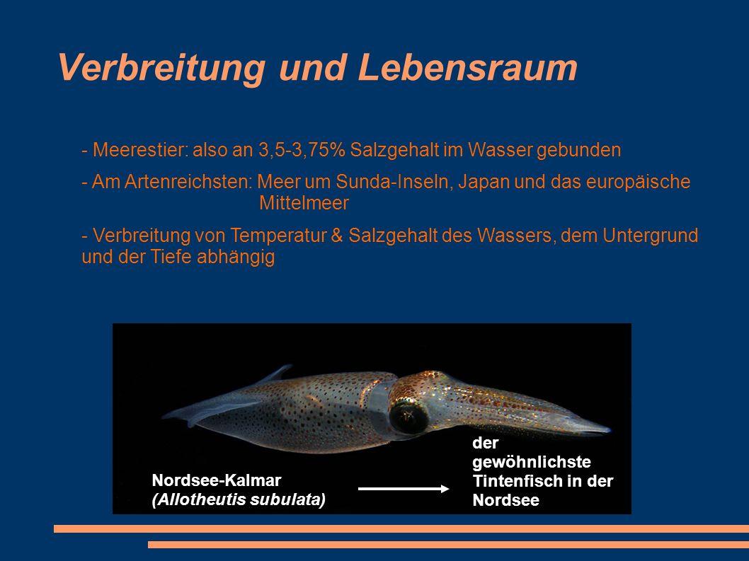 Verbreitung und Lebensraum - Meerestier: also an 3,5-3,75% Salzgehalt im Wasser gebunden - Am Artenreichsten: Meer um Sunda-Inseln, Japan und das euro
