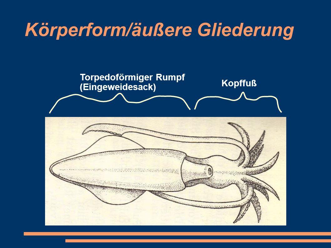 Körperform/äußere Gliederung Kopffuß Torpedoförmiger Rumpf (Eingeweidesack)