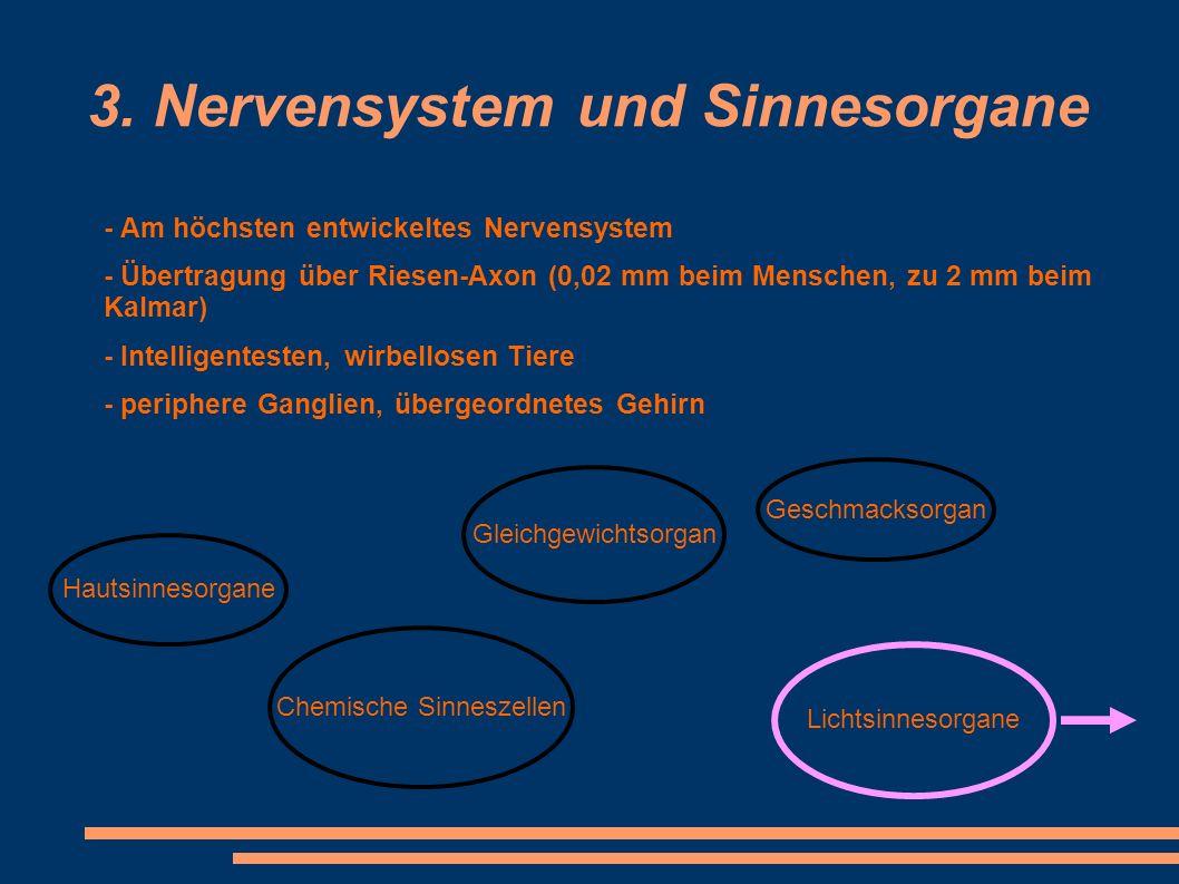 3. Nervensystem und Sinnesorgane - Am höchsten entwickeltes Nervensystem - Übertragung über Riesen-Axon (0,02 mm beim Menschen, zu 2 mm beim Kalmar) -
