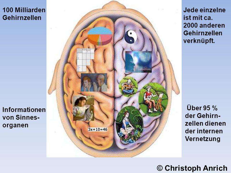 100 Milliarden Gehirnzellen Jede einzelne ist mit ca. 2000 anderen Gehirnzellen verknüpft. Über 95 % der Gehirn- zellen dienen der internen Vernetzung