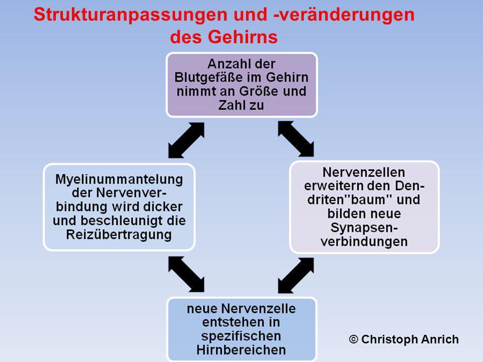 Strukturanpassungen und -veränderungen des Gehirns © Christoph Anrich