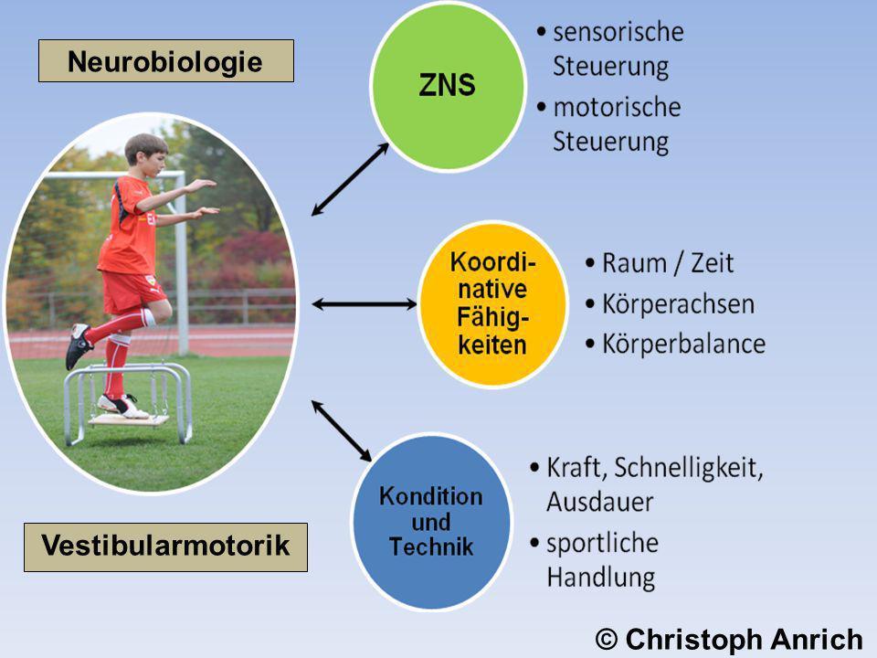 Vestibularmotorik Neurobiologie © Christoph Anrich