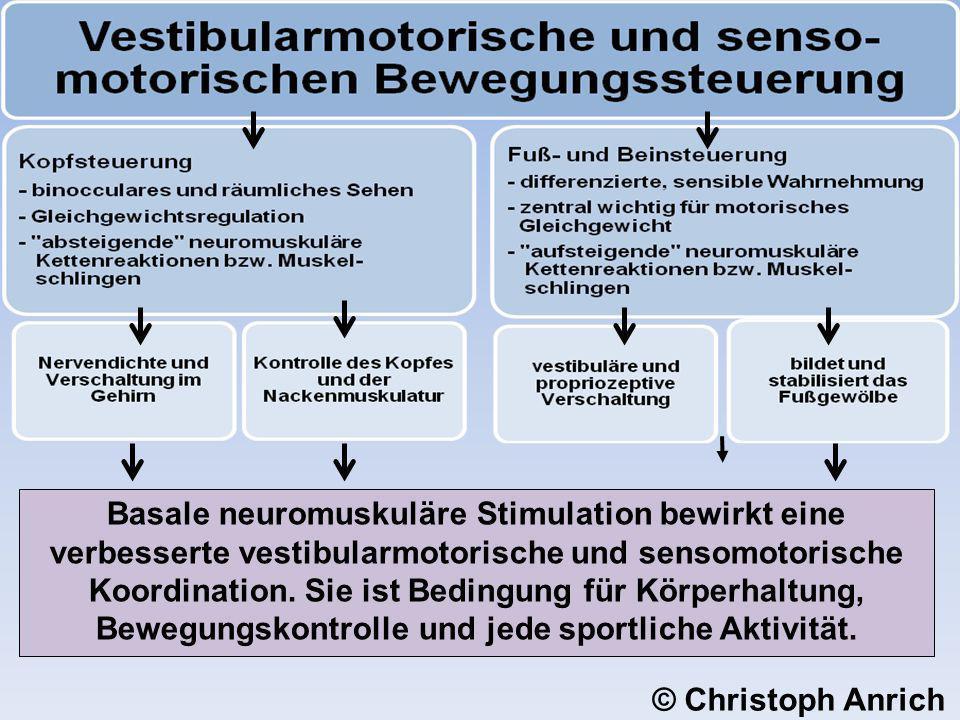 Basale neuromuskuläre Stimulation bewirkt eine verbesserte vestibularmotorische und sensomotorische Koordination. Sie ist Bedingung für Körperhaltung,