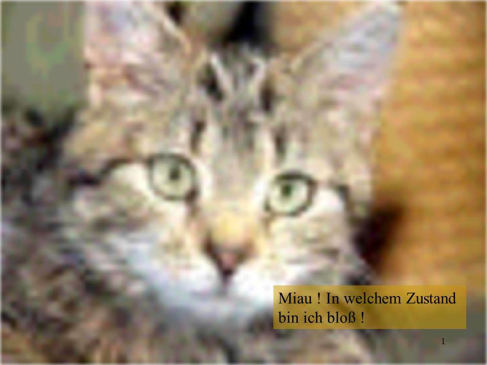 2 Schrödingers Katze Wertvolles Experiment .Bitte eine Stunde geschlossen halten .