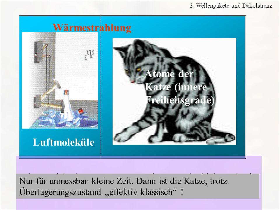 48 Wärmestrahlung Luftmoleküle Atome der Katze (innere Freiheitsgrade) Die -Funktion des ganzen Systems würde zum Ausdruck bringen, dass in ihr die le