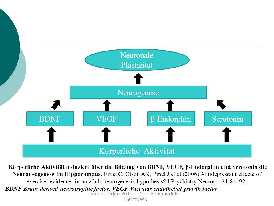 Körperliche Aktivität VEGFBDNFβ-EndorphinSerotonin Neurogenese Neuronale Plastizität Körperliche Aktivität induziert über die Bildung von BDNF, VEGF,