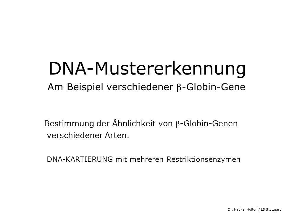 Dr. Hauke Holtorf / LS Stuttgart DNA-Mustererkennung Am Beispiel verschiedener -Globin-Gene Bestimmung der Ähnlichkeit von -Globin-Genen verschiedener