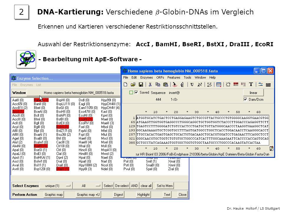 Dr. Hauke Holtorf / LS Stuttgart Erkennen und Kartieren verschiedener Restriktionsschnittstellen. Auswahl der Restriktionsenzyme: AccI, BamHI, BseRI,
