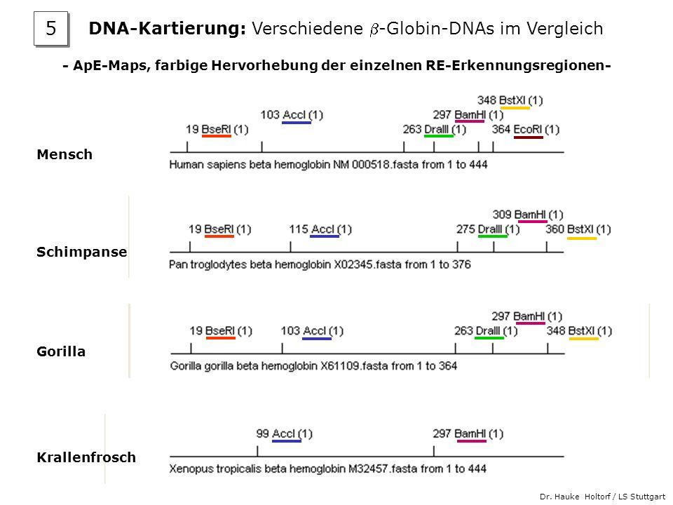 Dr. Hauke Holtorf / LS Stuttgart - ApE-Maps, farbige Hervorhebung der einzelnen RE-Erkennungsregionen- Mensch Schimpanse Gorilla Krallenfrosch DNA-Kar