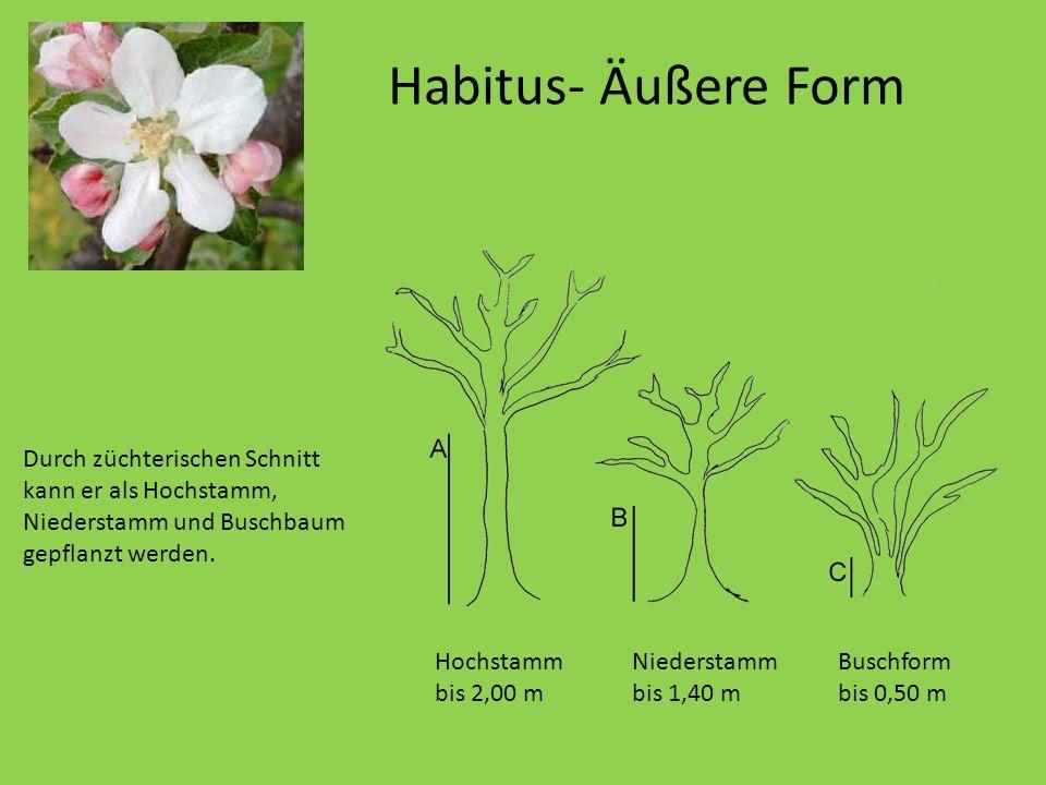 Habitus- Äußere Form Er wird nur etwa 10 Meter hoch. Durch züchterischen Schnitt kann er als Hochstamm, Niederstamm und Buschbaum gepflanzt werden. Ho