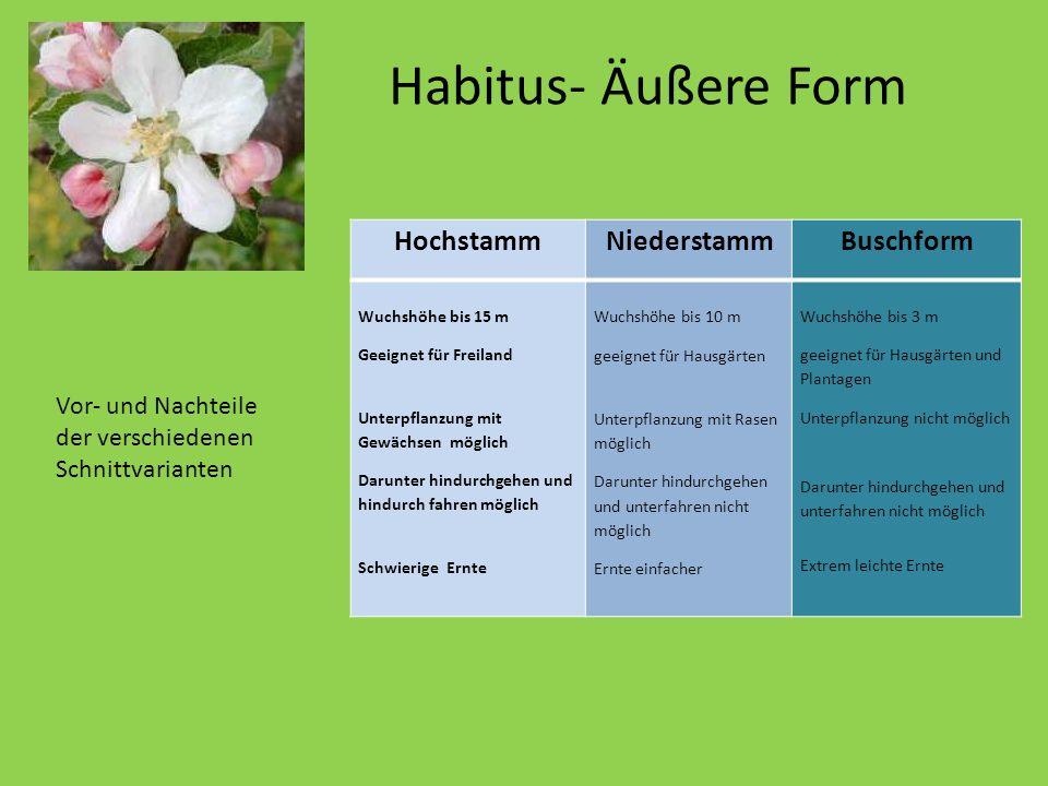 Habitus- Äußere Form Er wird nur etwa 10 Meter hoch. HochstammNiederstamm Buschform Wuchshöhe bis 15 m Geeignet für Freiland Unterpflanzung mit Gewäch