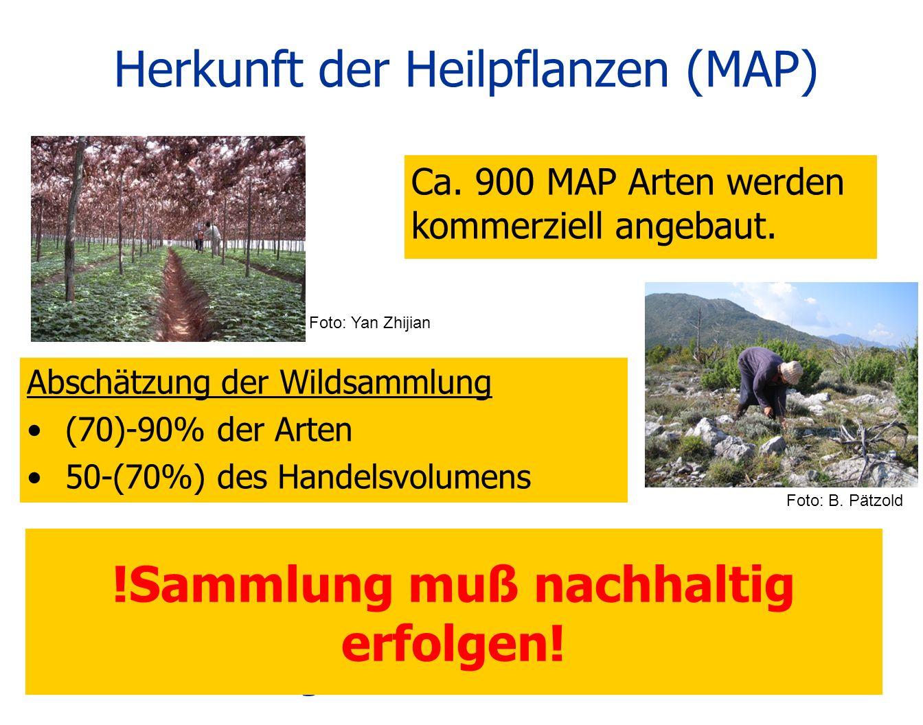 Die meisten MAP-Arten werden derzeit – und auch in Zukunft – wild gesammelt! Anbau kann nicht die Hauptlösung für Übersammlung sein! Ca. 900 MAP Arten