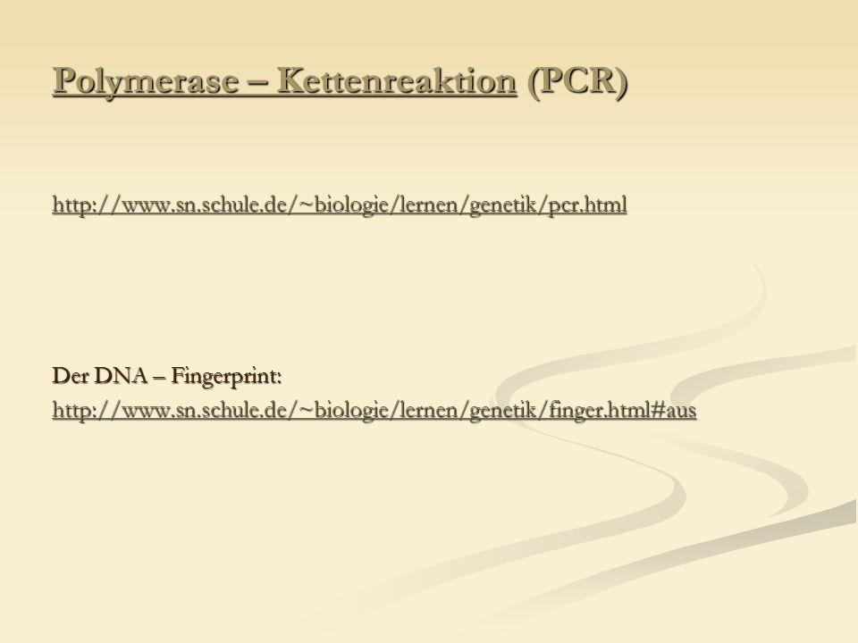 Polymerase – Kettenreaktion (PCR) http://www.sn.schule.de/~biologie/lernen/genetik/pcr.html Der DNA – Fingerprint: http://www.sn.schule.de/~biologie/l