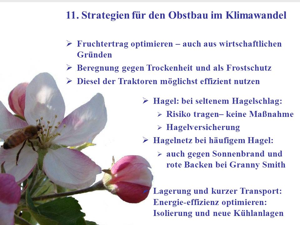 Dr. Michael Blanke, Universität Bonn- Obstbau im Klimawandel Goethe Institut Bihac 24 März 2011 19 11. Strategien für den Obstbau im Klimawandel Fruch