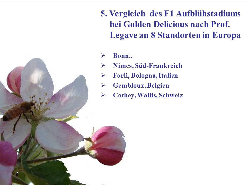 Dr. Michael Blanke, Universität Bonn- Obstbau im Klimawandel Goethe Institut Bihac 24 März 2011 8 5. Vergleich des F1 Aufblühstadiums bei Golden Delic