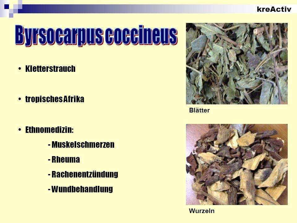 kreActiv Blätter Wurzeln Kletterstrauch tropisches Afrika Ethnomedizin: - Muskelschmerzen - Rheuma - Rachenentzündung - Wundbehandlung
