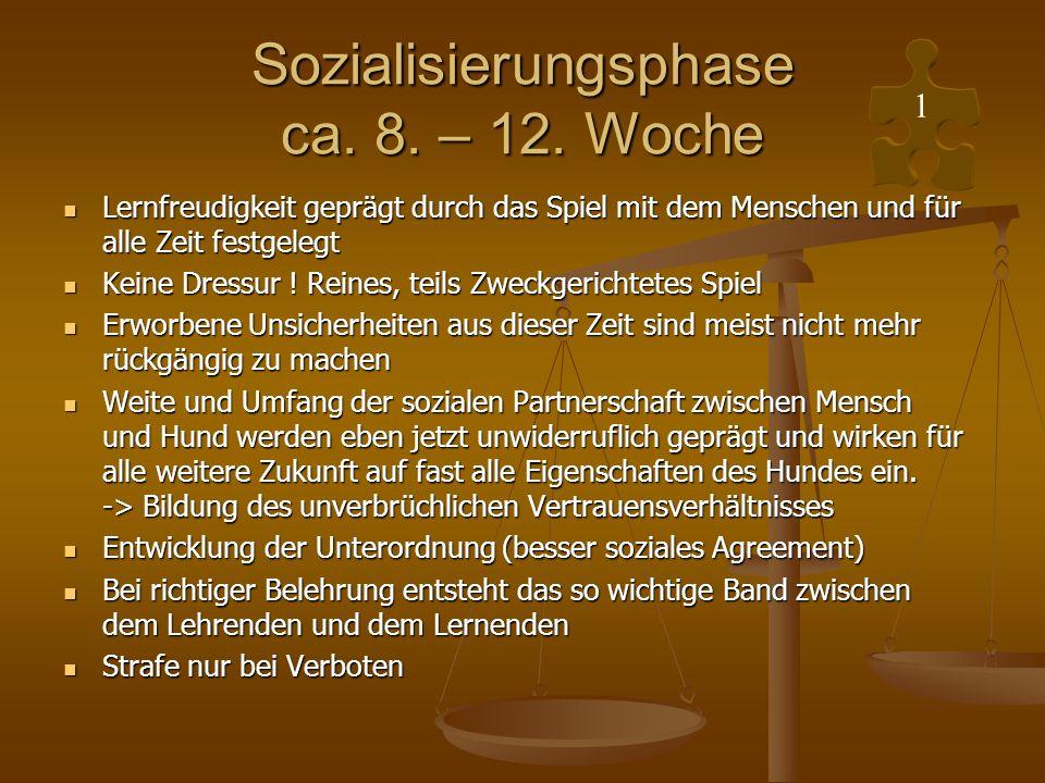 Sozialisierungsphase ca. 8. – 12. Woche Lernfreudigkeit geprägt durch das Spiel mit dem Menschen und für alle Zeit festgelegt Lernfreudigkeit geprägt