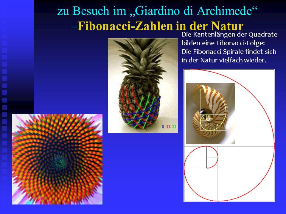 zu Besuch im Giardino di Archimede –Fibonacci-Zahlen in der Natur Die Kantenlängen der Quadrate bilden eine Fibonacci-Folge: Die Fibonacci-Spirale fin
