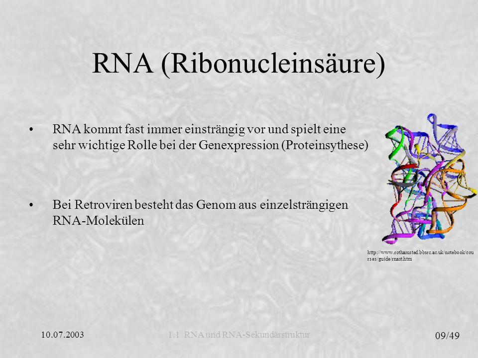 10.07.2003 10/49 1.1 RNA und RNA-Sekundärstruktur RNA (Ribonucleinsäure) http://www.rothamsted.bbsrc.ac.uk/notebook/cou rses/guide/rnast.htm Die 3 wichtigsten Arten der RNA: Ribosomale RNA/rRNA (Strukturelemente der Ribosomen), Transfer RNA/tRNA (transportiert Aminosäuren) und Messenger RNA/mRNA (entsteht beim Kopieren der Gene) Weitere RNA-Typen: Katalytische RNAs RNAs, die keine Proteine kodieren: RNAi, miRNA, snRNA, tmRNA, gRNAs und snoRNAs