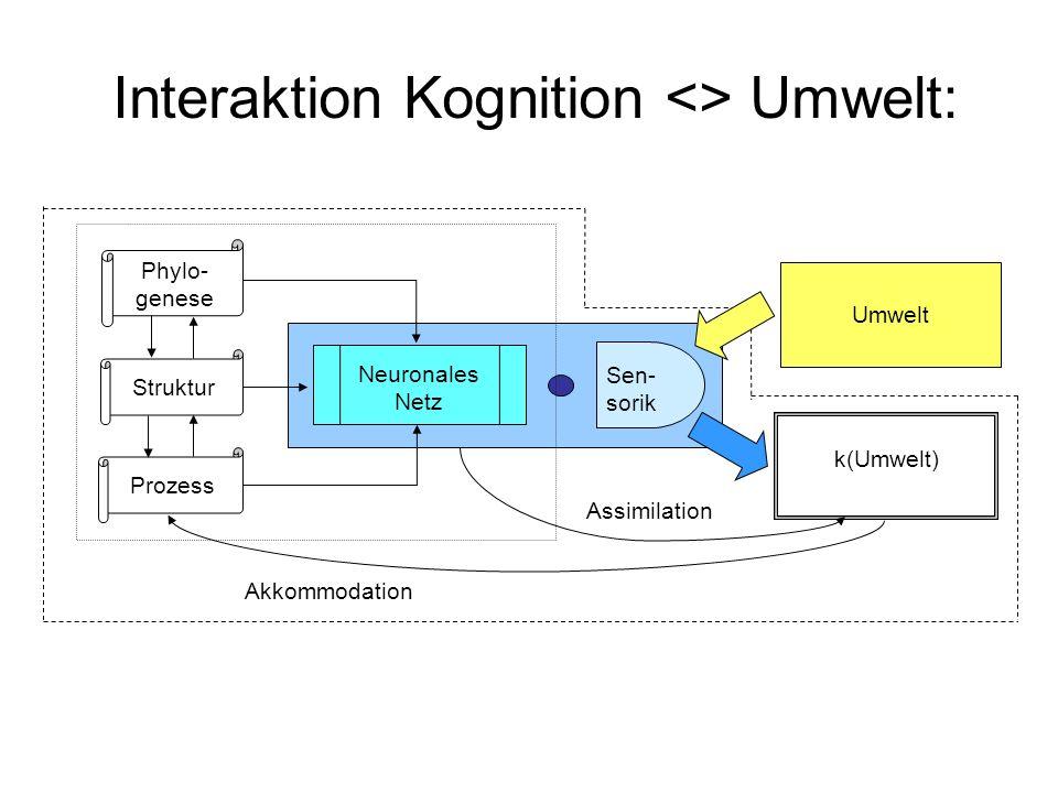 Phylo- genese Struktur Prozess Neuronales Netz Sen- sorik k(Umwelt) Umwelt Akkommodation Assimilation Interaktion Kognition <> Umwelt: