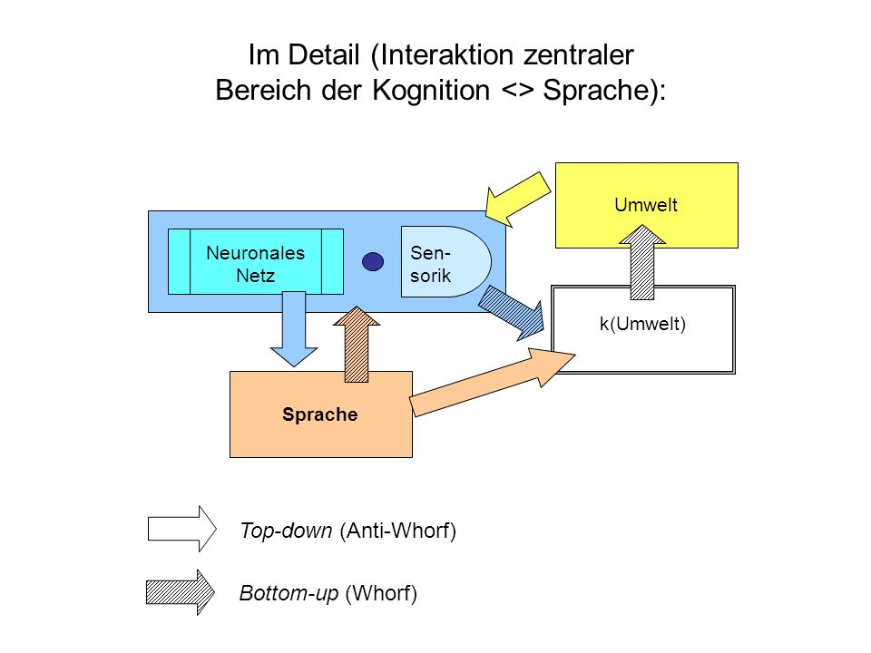 Sprache Neuronales Netz Sen- sorik k(Umwelt) Umwelt Im Detail (Interaktion zentraler Bereich der Kognition <> Sprache): Top-down (Anti-Whorf) Bottom-up (Whorf)