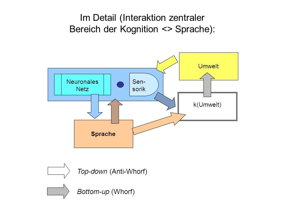 Schemata und Sprache Ausgangsvermutung: Sprache verhält sich wie schema-basierte Interaktion von Kognition und Umwelt, ist also schematisch aufgebaut Sprache benötigt Konzepte, d.h.