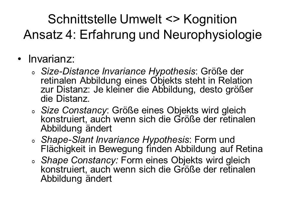 Schnittstelle Umwelt <> Kognition Ansatz 4: Erfahrung und Neurophysiologie Invarianz: o Size-Distance Invariance Hypothesis: Größe der retinalen Abbil