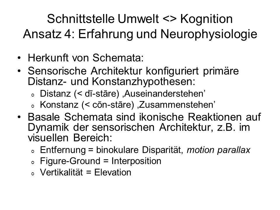 Schnittstelle Umwelt <> Kognition Ansatz 4: Erfahrung und Neurophysiologie Herkunft von Schemata: Sensorische Architektur konfiguriert primäre Distanz