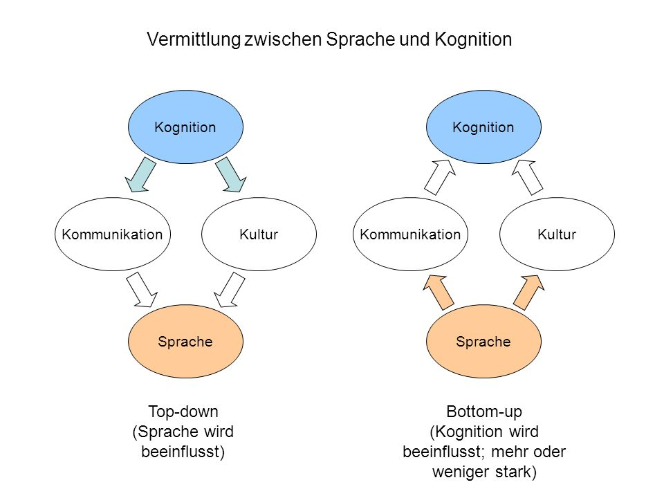 Vermittlung zwischen Sprache und Kognition Sprache Kognition KommunikationKultur Sprache Kognition KommunikationKultur Top-down (Sprache wird beeinflu