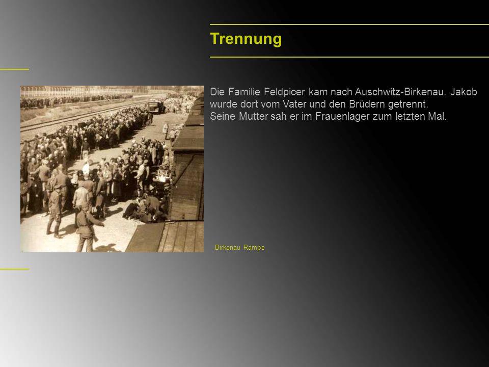 Trennung Die Familie Feldpicer kam nach Auschwitz-Birkenau. Jakob wurde dort vom Vater und den Brüdern getrennt. Seine Mutter sah er im Frauenlager zu