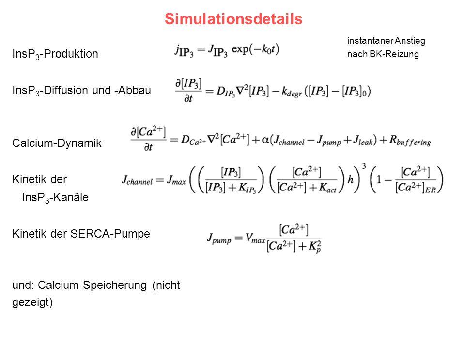 Simulationsdetails InsP 3 -Produktion InsP 3 -Diffusion und -Abbau Calcium-Dynamik Kinetik der InsP 3 -Kanäle Kinetik der SERCA-Pumpe und: Calcium-Spe