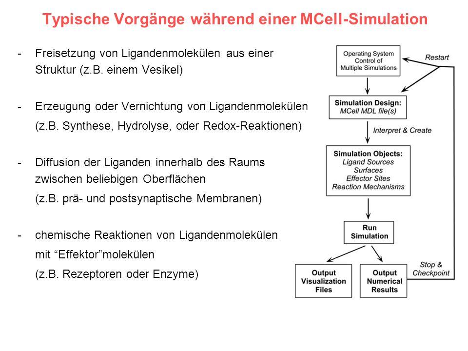 Typische Vorgänge während einer MCell-Simulation -Freisetzung von Ligandenmolekülen aus einer Struktur (z.B. einem Vesikel) -Erzeugung oder Vernichtun