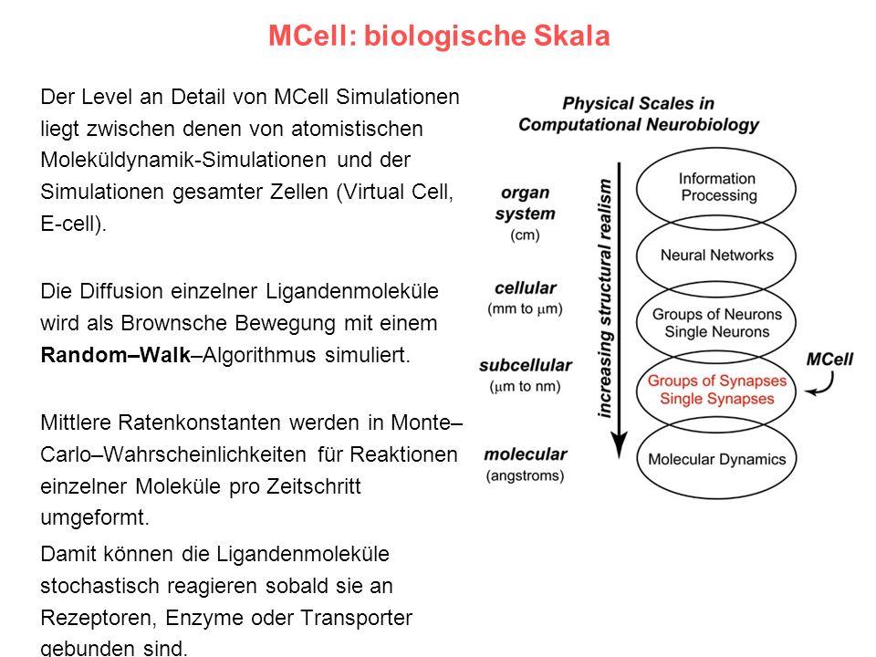 MCell: biologische Skala Der Level an Detail von MCell Simulationen liegt zwischen denen von atomistischen Moleküldynamik-Simulationen und der Simulat