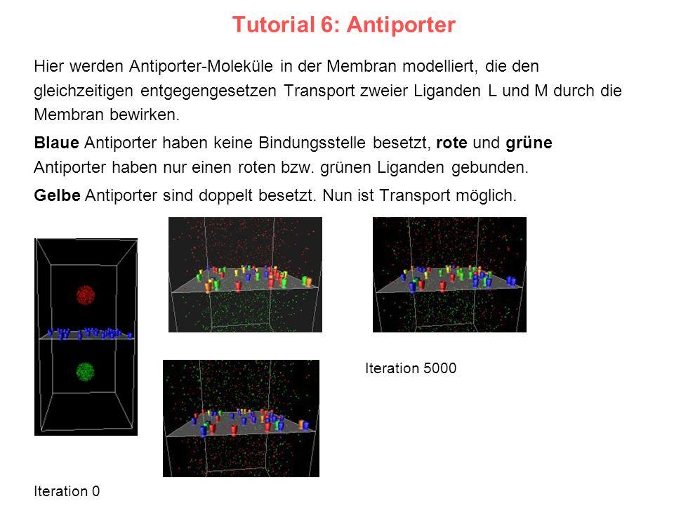 Tutorial 6: Antiporter Hier werden Antiporter-Moleküle in der Membran modelliert, die den gleichzeitigen entgegengesetzen Transport zweier Liganden L