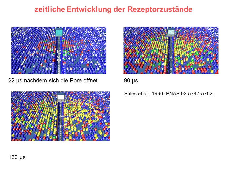 zeitliche Entwicklung der Rezeptorzustände Stiles et al., 1996, PNAS 93:5747-5752. 22 μs nachdem sich die Pore öffnet 90 μs 160 μs