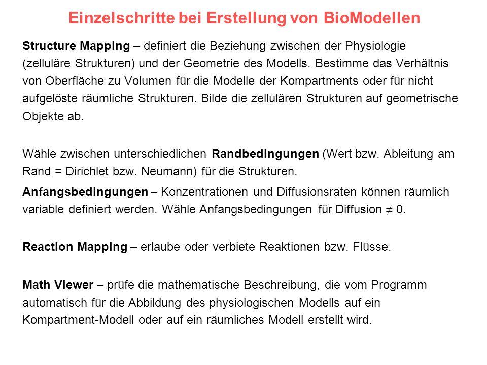 Einzelschritte bei Erstellung von BioModellen Structure Mapping – definiert die Beziehung zwischen der Physiologie (zelluläre Strukturen) und der Geom
