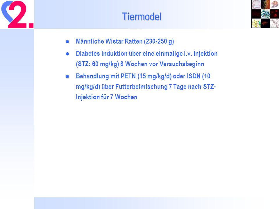 Tiermodel Männliche Wistar Ratten (230-250 g) Diabetes Induktion über eine einmalige i.v.