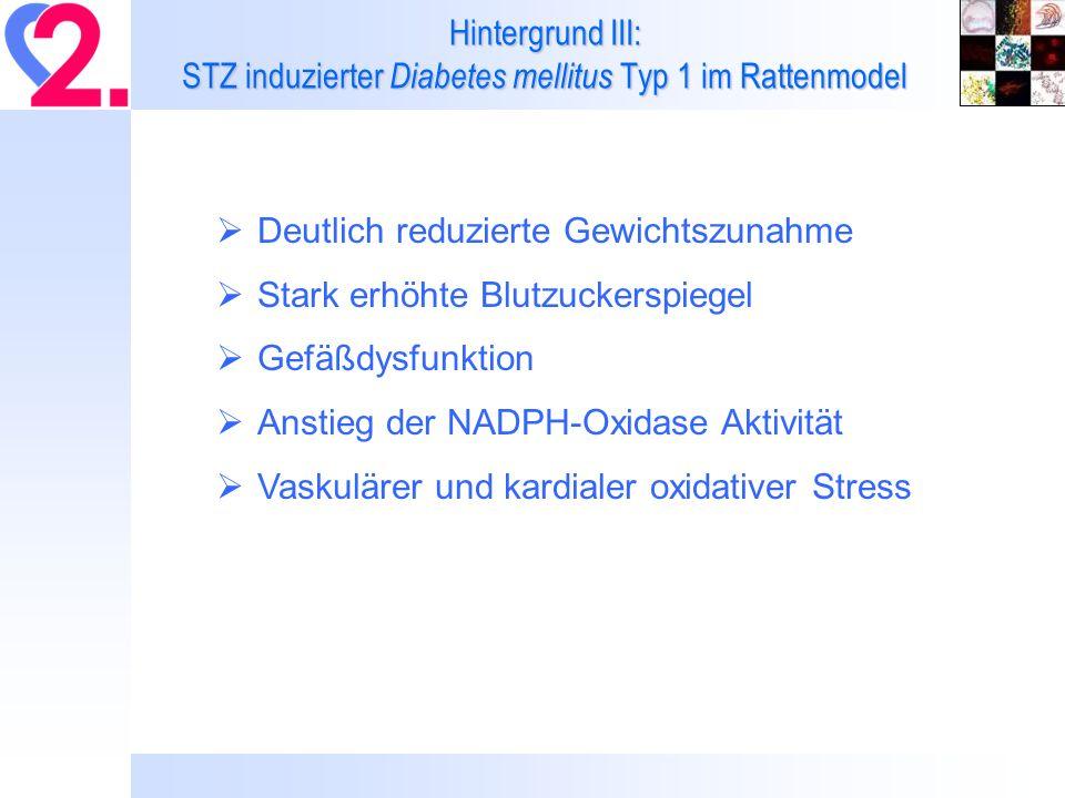 Hintergrund III: STZ induzierter Diabetes mellitus Typ 1 im Rattenmodel Deutlich reduzierte Gewichtszunahme Stark erhöhte Blutzuckerspiegel Gefäßdysfunktion Anstieg der NADPH-Oxidase Aktivität Vaskulärer und kardialer oxidativer Stress