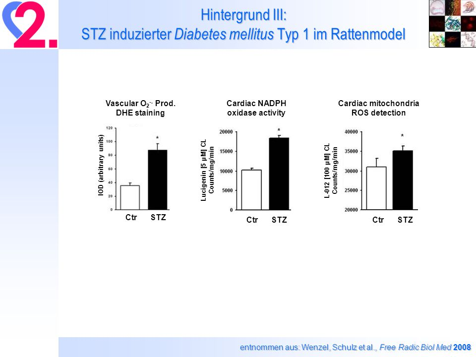 Ergebnisse II: STZ + Nitrate Blutserum P<0.05: * vs.